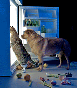 Cat and dog looking in fridge for food