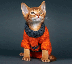 Cat in a wooly jumper
