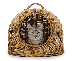 Cat looking out of a wicker basket