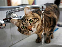 Cat peering out from under a tap. Looking insightful