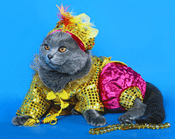 Cat wearing very bright clothes