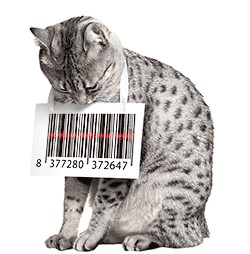 Cat with barcode around neck illustrating cat microchipping