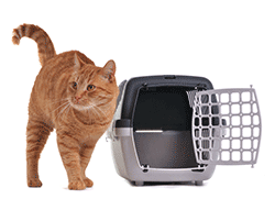 Ginger cat next to a cat cage carrier