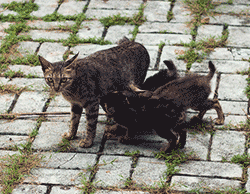 There are too many stray and unwanted cats on the streets