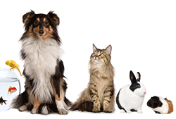 Cat alongside dog, fish, rabbit, and guinea pig pets