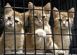 Rescue kittens looking through cage