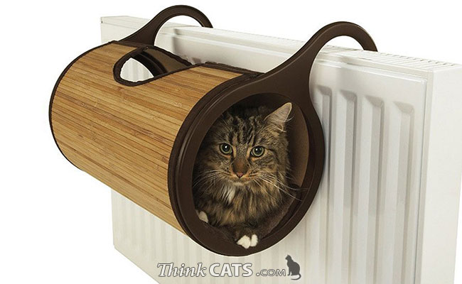 Image Gallery - Indoor / House Cats